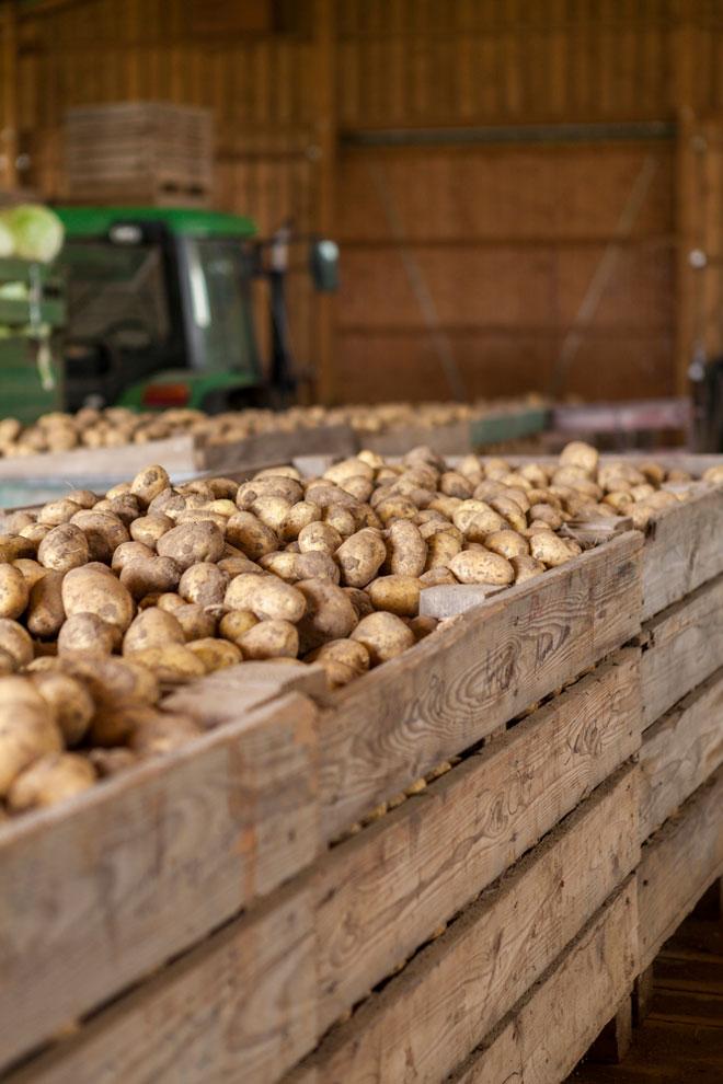 ящики для картошки