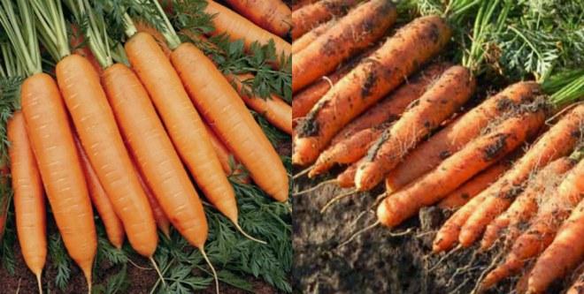 мыть или не мыть морковь