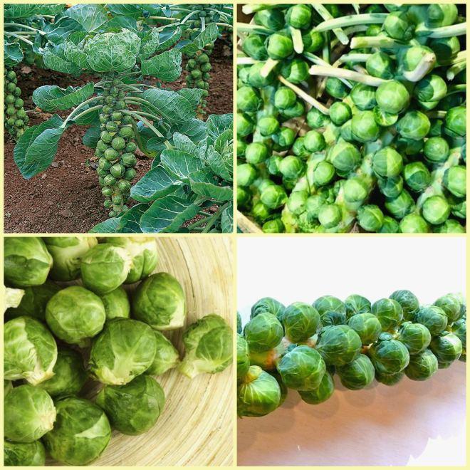 пример овоща